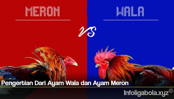 Pengertian Dari Ayam Wala dan Ayam Meron