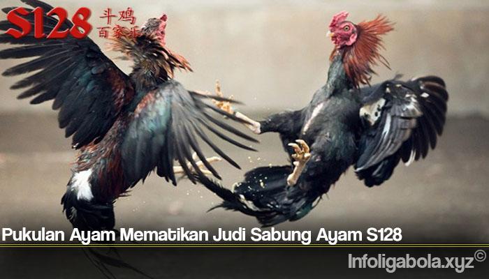 Pukulan Ayam Mematikan Judi Sabung Ayam S128